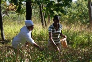 Gathering seeds s
