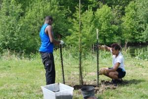 tree planting2 s